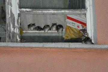 Wideo: Tak ze szczurz� plag� �y�o si� przy...